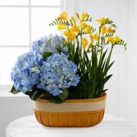 Cesto de Flores da Época em Amarelo e Azul