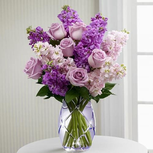 Exquisite grace calla lily plant